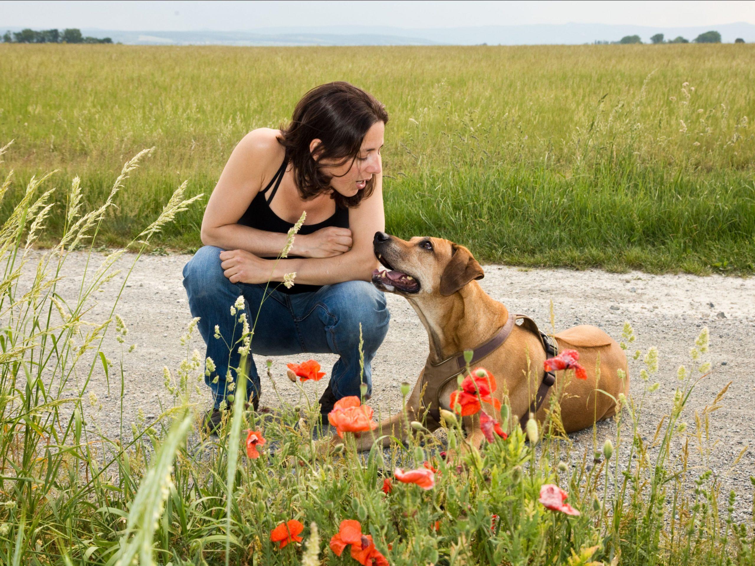 Mensch Hund Bindung Kurs
